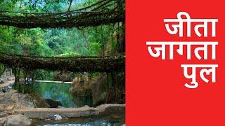Living Root Bridges of Meghalaya - OMG! Yeh Mera India