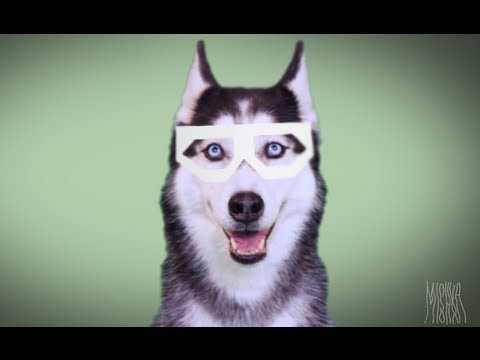 MISHKA: DUBSTEP DOG