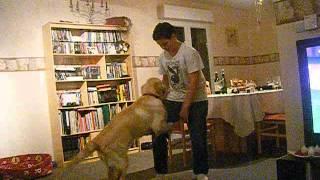 le chien qui baise