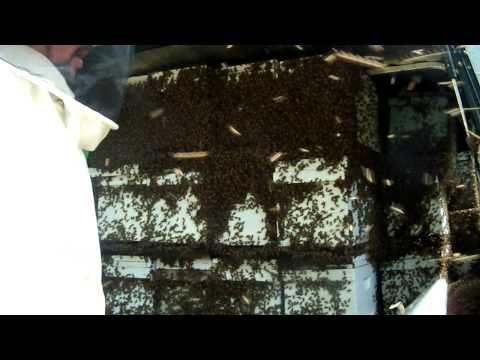 NUCS BEEKEEPING, BEEKEEPER HONEYBEE Warm Weather Move 52 Honey Bee Beehive Nucs,Queens