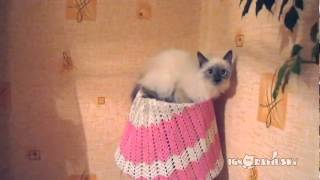 cat inside a knitted lampshade