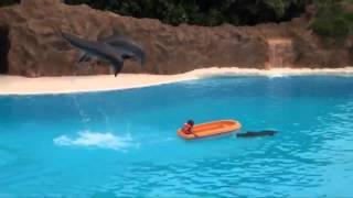 Aplauze la delfinariu
