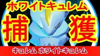 【0時 1時限定】ホワイトキュレムGET! みんなのポケモンスクランブル実況