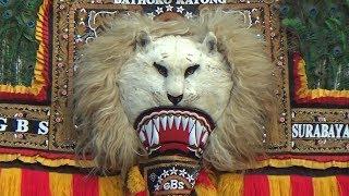 Penampakan Macan Putih Dalam Wujud Singo Barong Reyog Ponorogo