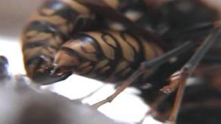 getlinkyoutube.com-女王蜂が侵入して交尾