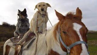 getlinkyoutube.com-HORSES ★ Funny Horse Videos [Funny Pets]