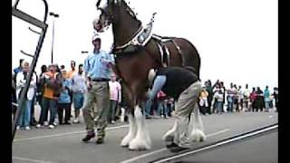 getlinkyoutube.com-The Clydesdales In Our Little Town