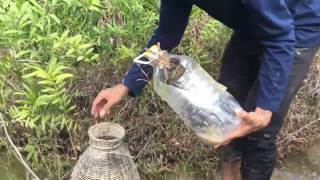 getlinkyoutube.com-Amazing Human Catch Snake water  Using The Bottle Net Trap   How to Catch Snake in siem reab