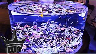 getlinkyoutube.com-Saltwater aquarium fish show - MACNA 2014