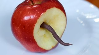 getlinkyoutube.com-WORM IN APPLE!