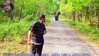 getlinkyoutube.com-Foolish Mobile Photographer in Front of  Broken Tusk Elephant .