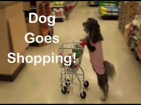 Ultimate Dog Tease-  Dog Goes Shopping!