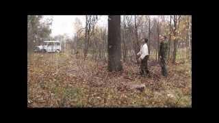 Ловля пчелиных роев 2012