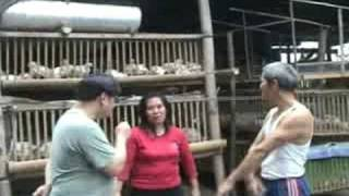 getlinkyoutube.com-Mr & Mrs Fauni Broiler testi b4 and after part 2