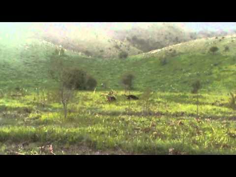 Κυνήγι λαγού στο Ξηρολίβαδο - Xirolivado hare hunting - part 4 - NEW!!