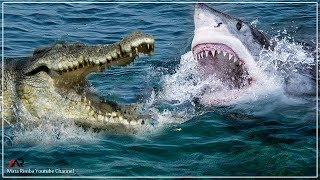 Pertarungan Sengit Ikan Hiu vs Buaya