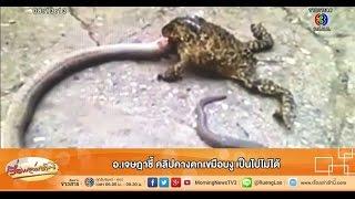 getlinkyoutube.com-เรื่องเล่าเช้านี้ อ.เจษฎาชี้ คลิปคางคกเขมือบงู เป็นไปไม่ได้ (20 ก.พ.58)