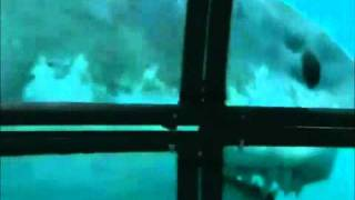 getlinkyoutube.com-Mosasauro vs Megalodon the real fight