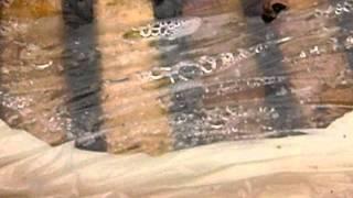 getlinkyoutube.com-Zimovanje pcela ispod PVC-folije