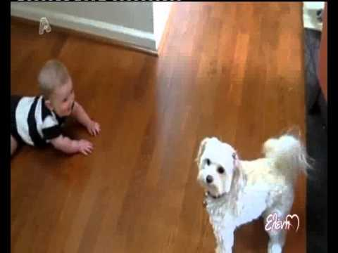 tvshow.gr: Μωρά που παίζουν με σκυλάκια