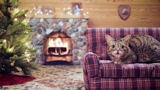 getlinkyoutube.com-Lil BUB's Very MOST Magical Yule Log Video