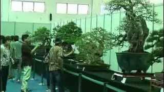 getlinkyoutube.com-Bonsai Cina   Part 2 Ottava Guangdong, Hong Kong Bonsai Chencun)