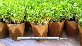 getlinkyoutube.com-الزراعة المائية .. طرق وانظمة مبتكرة