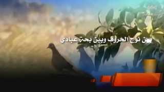 شيلة نوح الحروف كلمات الشاعر بويوسف العارضي اداء رائد الغضباني