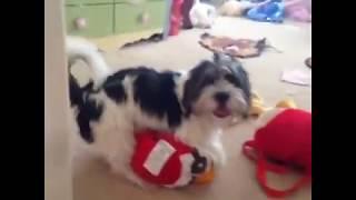 getlinkyoutube.com-Funny Dog Vine Compilation - Dogs will hump anything