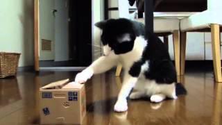 getlinkyoutube.com-O Gato Perplexo com Caixa Estranha