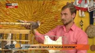 getlinkyoutube.com-porumbei Voiajorii moldovei