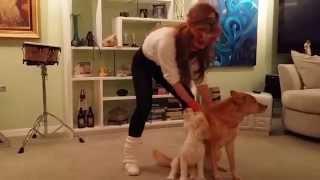 getlinkyoutube.com-30-Year Overnight Success Hanala Sagal Celebrates Dog's Birthday as Suzan Stadner from Shape Up LA!