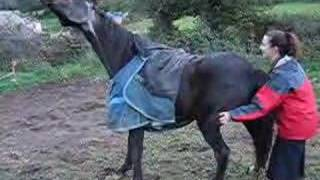 getlinkyoutube.com-Gay, A Very Itchy Horse