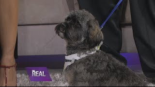 getlinkyoutube.com-Doggie 411 with Tamar, Vince and Miracle