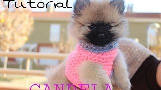 getlinkyoutube.com-Cómo hacer un Sweater / Chaleco para perritos  1/2