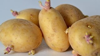 getlinkyoutube.com-Growing potatoes at home is easy