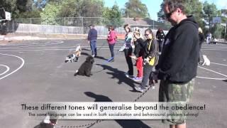 getlinkyoutube.com-2013 Alpha Dog Training PUPPY CLASS April 21st
