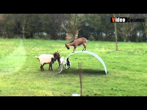 Παιδική χαρά για κατσίκια - Videocosmos.gr