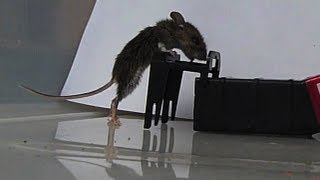 getlinkyoutube.com-Mousetrap in Slow Motion - Kness Tip-Trap Humane Mousetrap