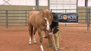 getlinkyoutube.com-Horse Training - Proper Technique to Laying Your Horse Down