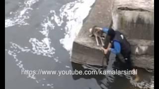 getlinkyoutube.com-شاهد رده فعل الكلب بعد انقاذ الرجل له? Dog expresses its gratitude after being rescued.
