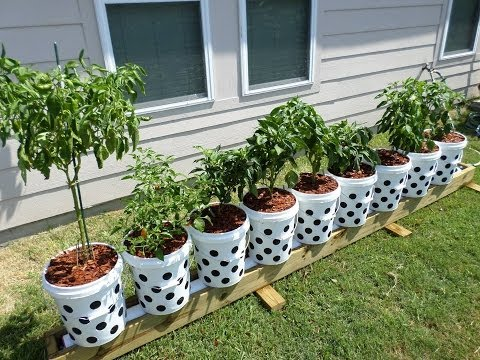 What Is Air Pruning? Can It Really Improve My Container Gardening? You May Be Surprised!