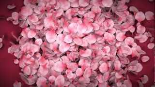 getlinkyoutube.com-Falling Flower Petals Ae Template