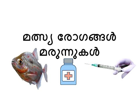 Ornamental fish diseases