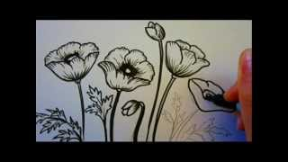 getlinkyoutube.com-Flower Tutorial - How To Draw Flowers - Poppy Flowers