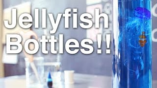 getlinkyoutube.com-Jellyfish in a Bottle!! + Announcement!!