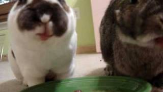 getlinkyoutube.com-Rabbits Slurping Watermelon