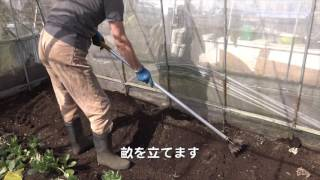 getlinkyoutube.com-菜園だより170215マノアなど植え付け