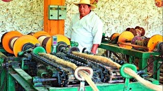 getlinkyoutube.com-Sisal Fiber Processing - Sotuta De Peon, Yucatan