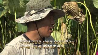 getlinkyoutube.com-[Okdab Media] 스마트 팜 스토리 10회-경산 키토산 연근 농장